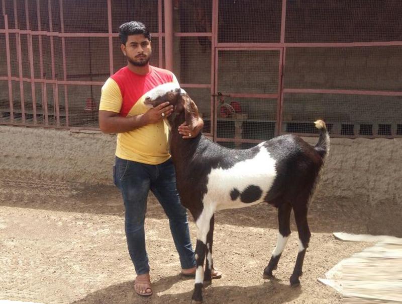 ALTAF GOAT FARMING | Apni Kheti's Progressive Farmer